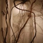 Growth / Overgrowth